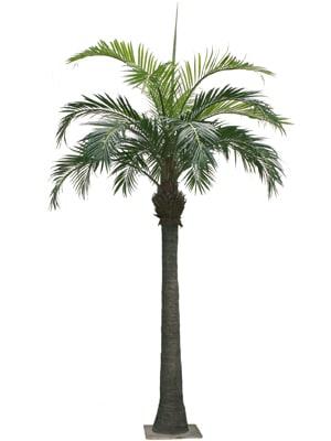 palm tree hire wedding decor