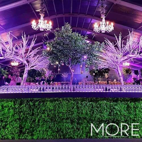 Frozen canopy tree wedding hire