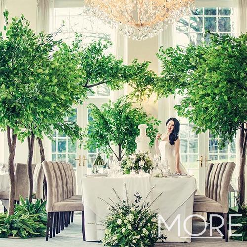 3m Ficus Tree Wedding Hire