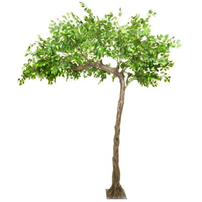 ficus tree hire wedding decor