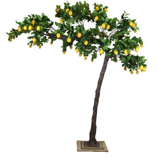 3m_Lemon_Canopy_Tree