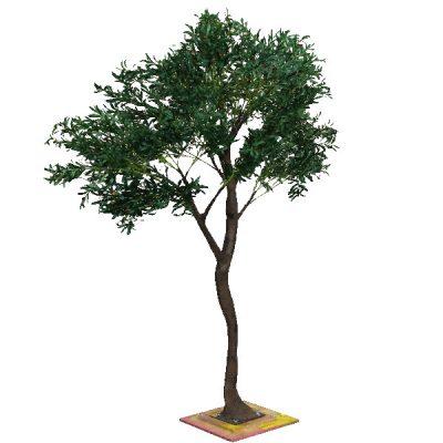 3m Olive Tree wedding hire