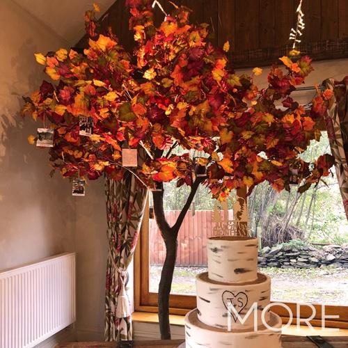 3m Autumn Tree hire