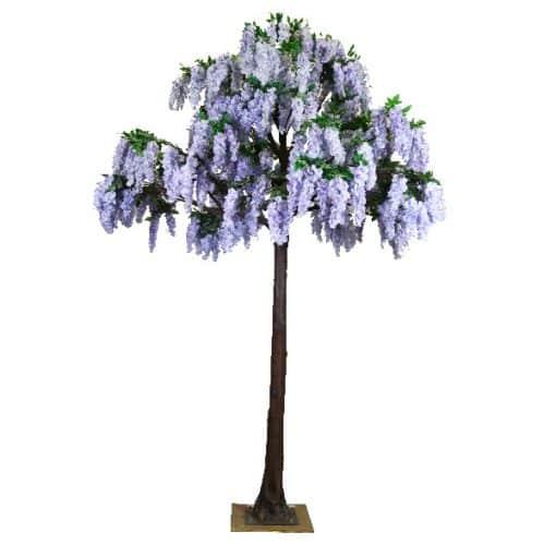 4m_Lilac_Wisteria_Tree