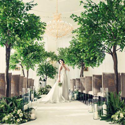 Ficus Tree lined wedding aisle