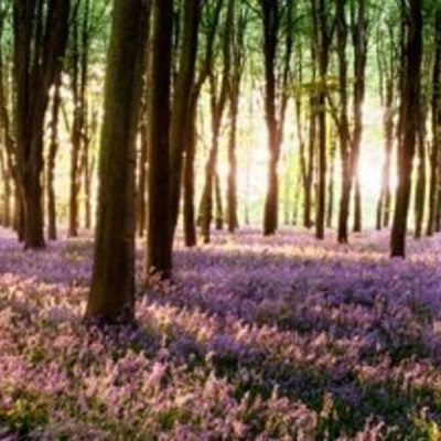 bluebell forest backdrop wedding decor hire