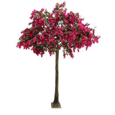 Bougainvillea_Canopy_Tree_4m