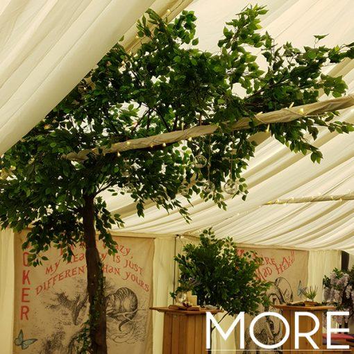 3.2m Canopy Ficus Tree hire