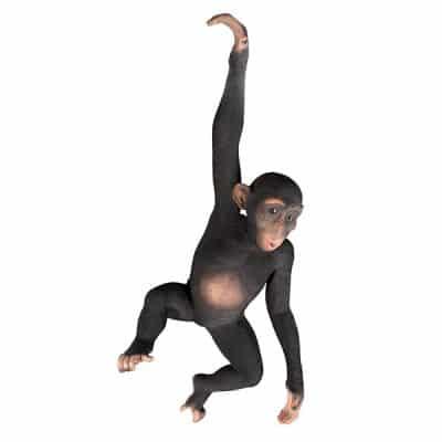 monkey prop hire circus wedding theme