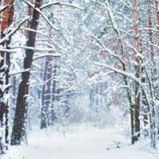 snowy forest backdrop wedding hire