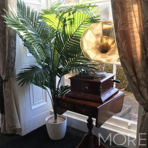 Kentia palm hire